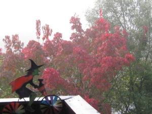 Herbst Nebel 05