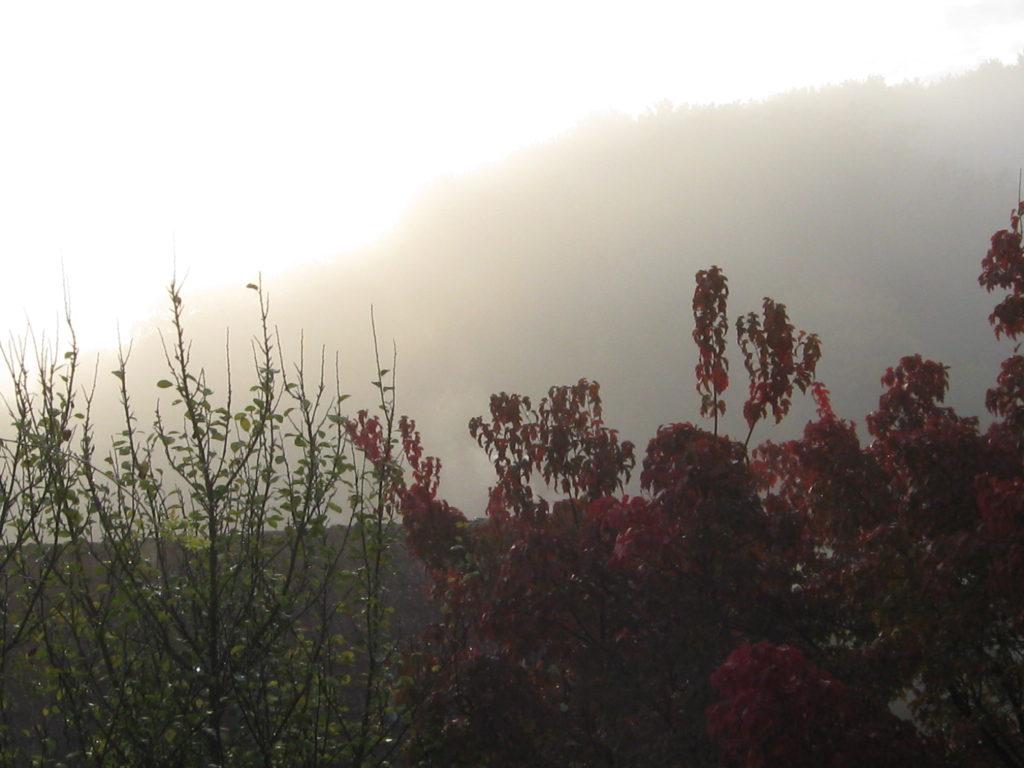 Herbst Nebel 11