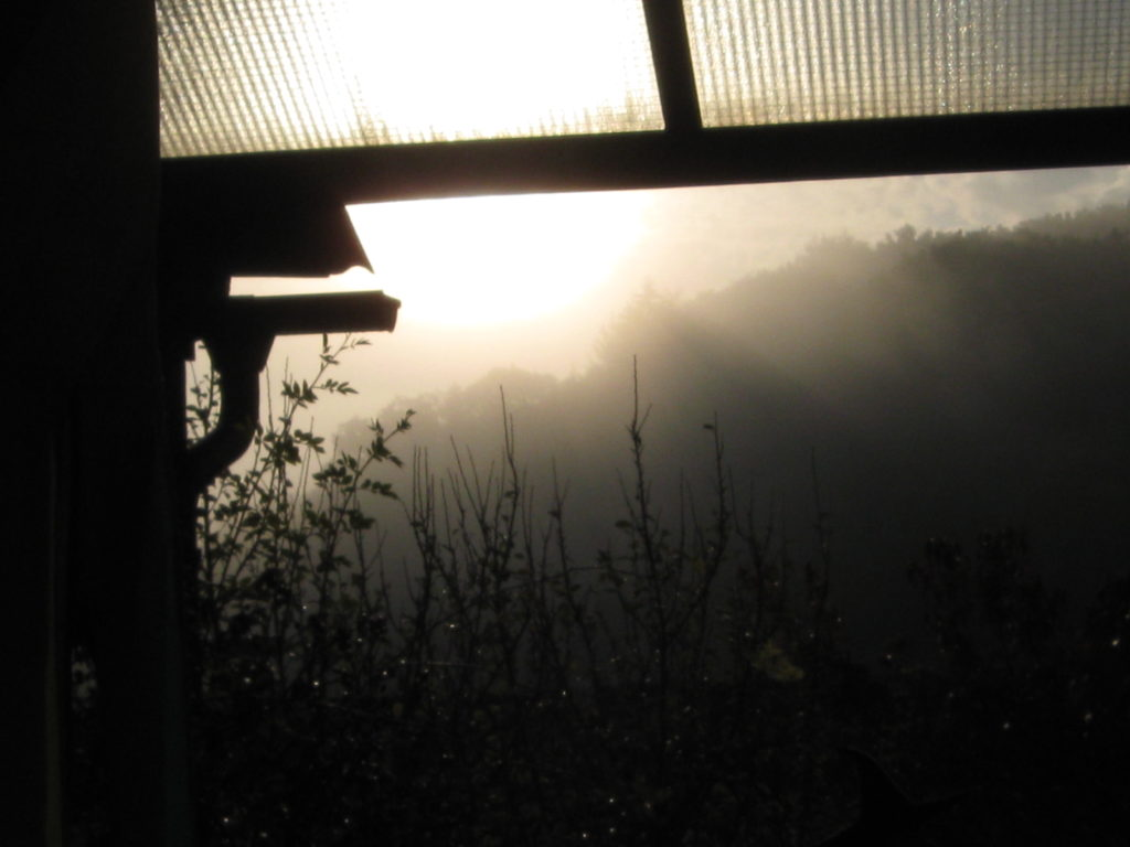 Herbst Nebel 12