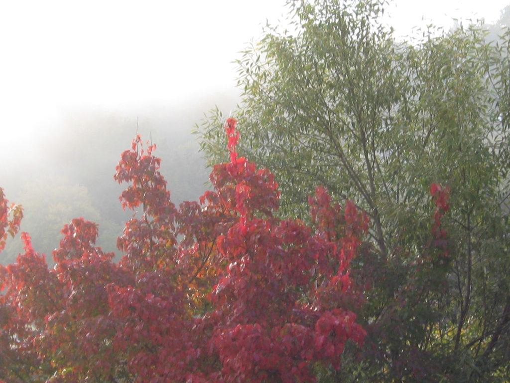 Herbst Nebel 14