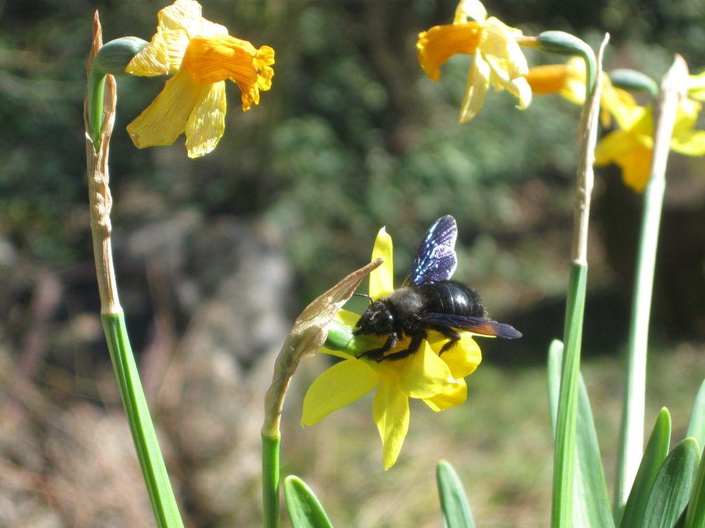 Schwarze Bienen 7.3.21 04
