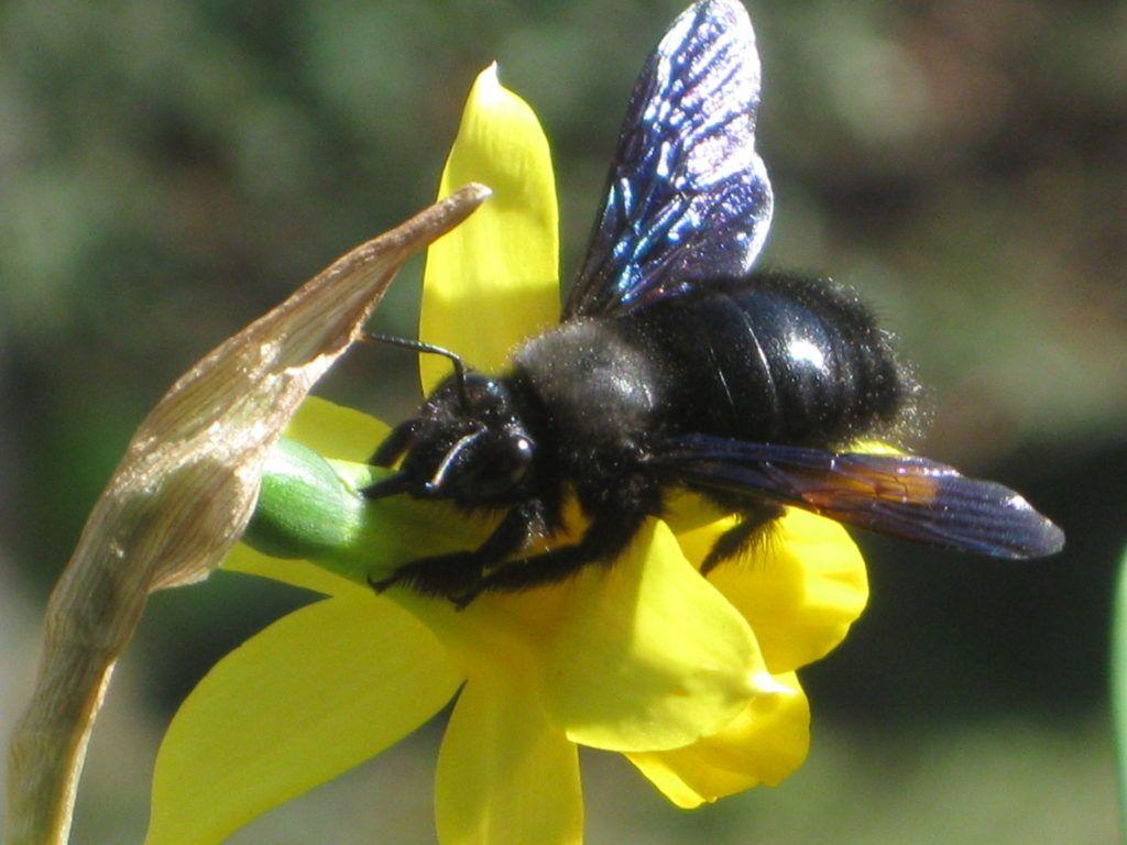 Schwarze Bienen 7.3.21 14