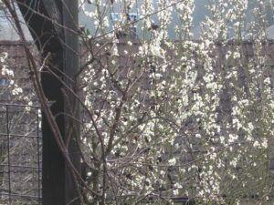 Blüten Zauber 05