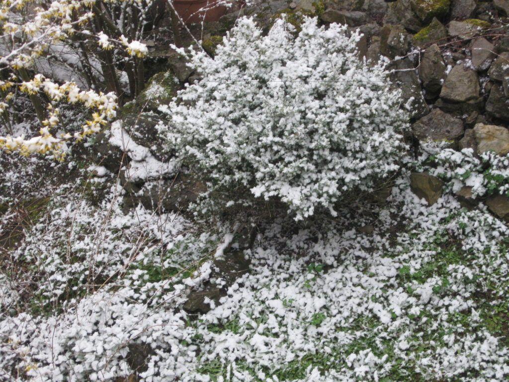 Leise Rieselt Der Schnee .... 09