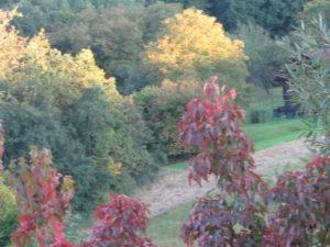Goldener Herbst 01
