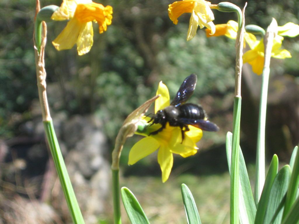Schwarze Bienen 7.3.21 02