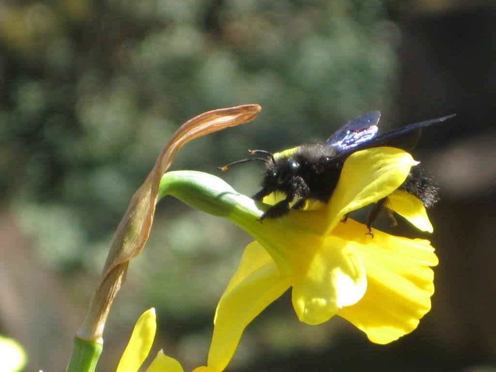 Schwarze Bienen 7.3.21 06