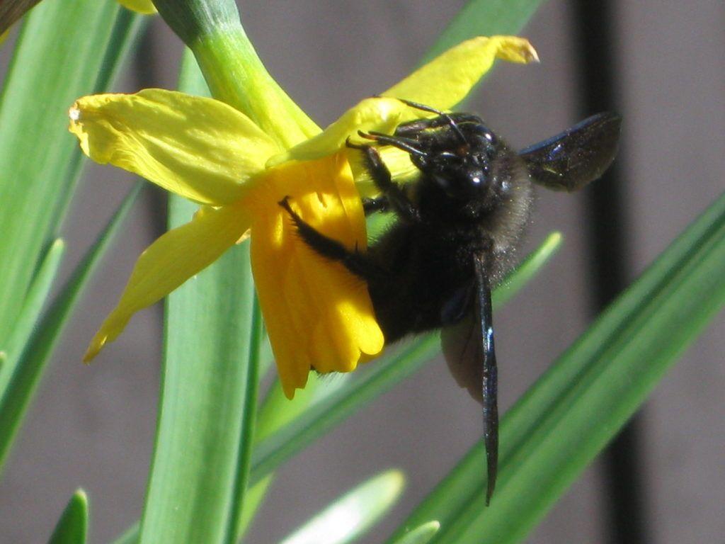 Schwarze Bienen 7.3.21 10