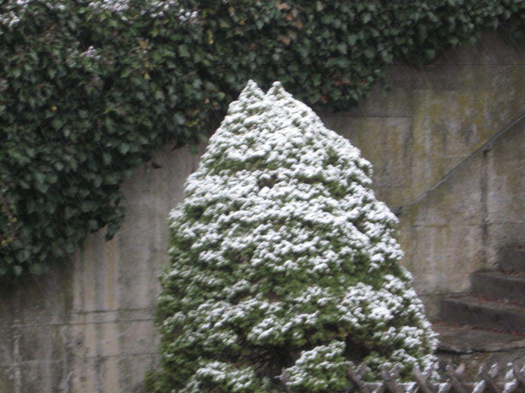 Leise Rieselt Der Schnee .... 03
