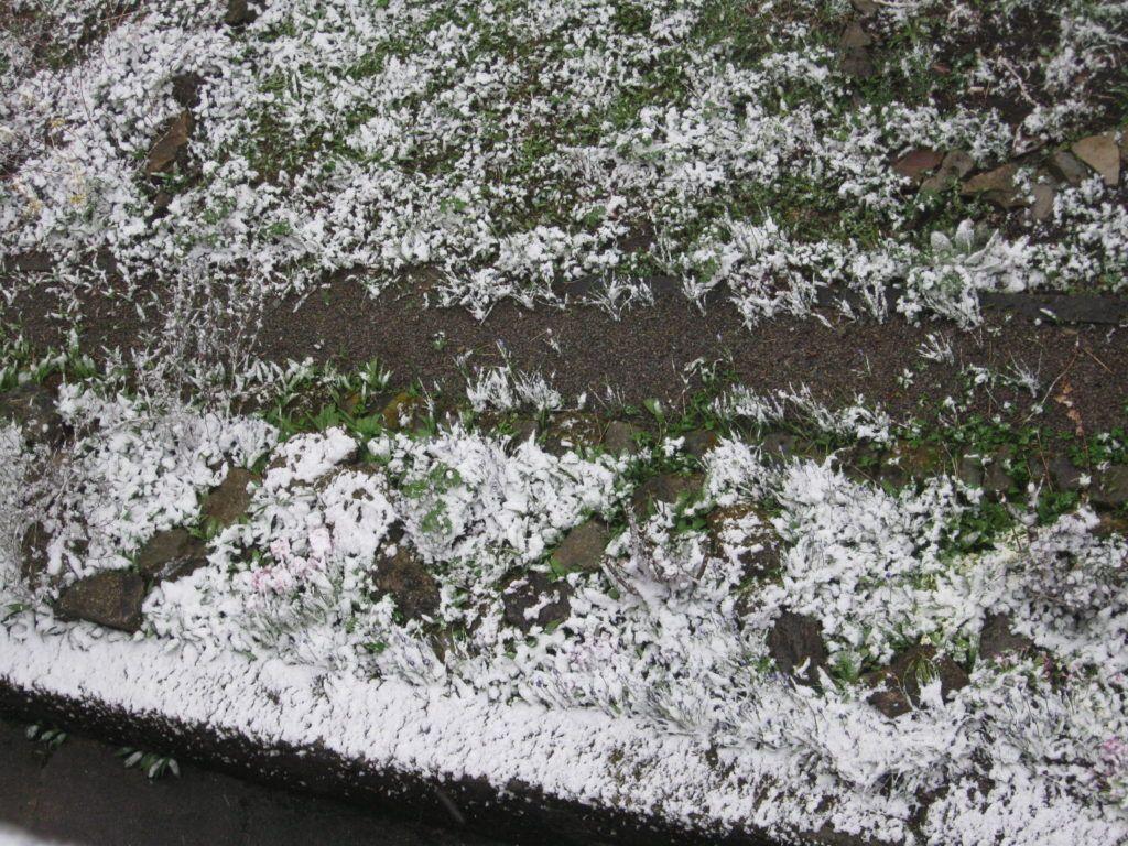 Leise Rieselt Der Schnee .... 06