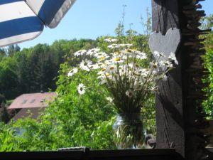 Weiße Schönheiten Margeriten 20